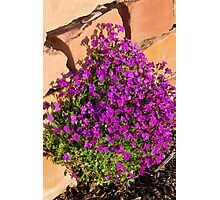 Lavender flowers by rock wall Photographic Print