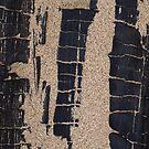 Charred Driftwood by Dawne Olson
