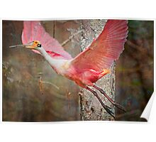 Flight of the Roseate Spoonbill Poster