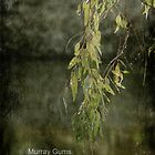 Murray Gums by garts