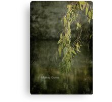 Murray Gums Canvas Print