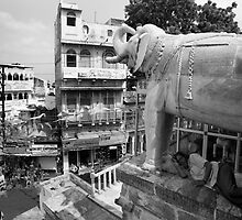 Udaipur - India by jaqueline