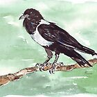 Domino, the Pied Crow (Corvus albus) by Maree Clarkson