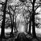 Ethereal driveway by Barry Feldman