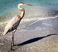 GREAT HERON AND HIS SHADOW by katemmo
