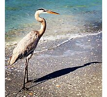 GREAT HERON AND HIS SHADOW Photographic Print