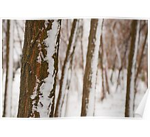 Tree Trunks in Snow Poster