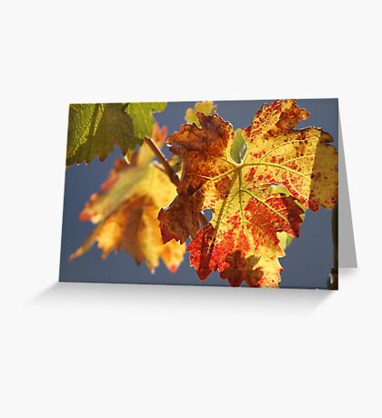 Autumn in the vineyard Greeting Card