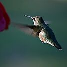 In Flight by Pat Moore