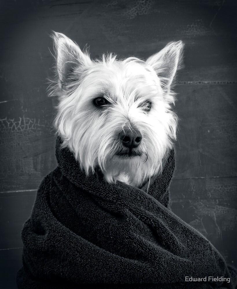 Portrait of a Westie Dog by Edward Fielding