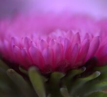 Bright Pink! by Melinda Anderson