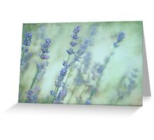 Soft Lavender Greeting Card