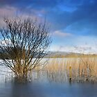 Llangorse lake - 02 by Paul Croxford