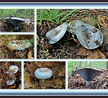 Lactarius Indigo Mushrooms by MotherNature2