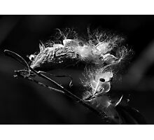 Weeds can be beautiful Photographic Print