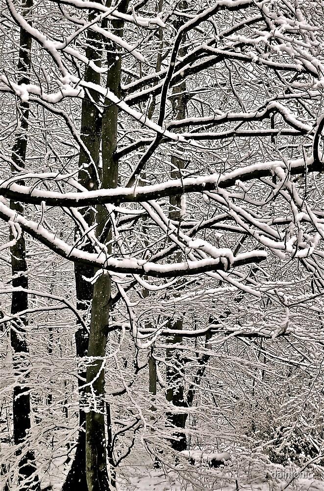 Snowfall by daimonic