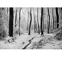 Winter Woodlands Photographic Print