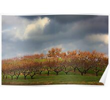 Storm in The Orchards   Poster