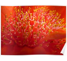 Blood Lily Poster