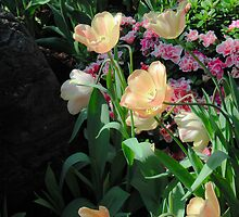 Spring Tulips in Bloom by Flatoutwhimsy