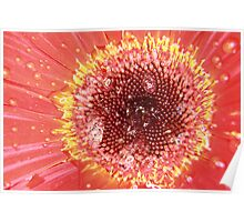 WET RED DAISY 3 Poster