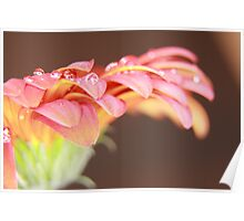 WET RED DAISY 5 Poster
