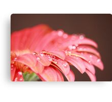 WET RED DAISY 6 Canvas Print