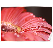 WET RED DAISY 7 Poster