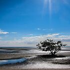 Solitary Tree at Low Tide by Silken Photography