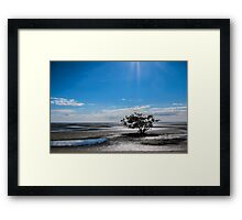 Solitary Tree at Low Tide Framed Print
