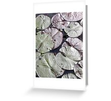 Lily Pads Greeting Card