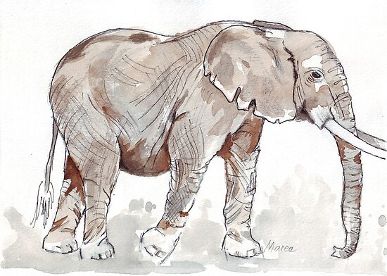 Elephant rumble by Maree  Clarkson