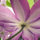 Under a Clematis Flower by lindsycarranza