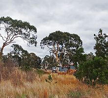 Along the Kilmore-Lancefield Road, VIC Australia by Margaret Morgan (Watkins)