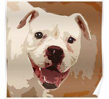 White Boxer Dog Poster