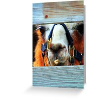 Guess the Animal Greeting Card