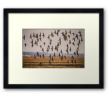 Grutto's come back home Framed Print
