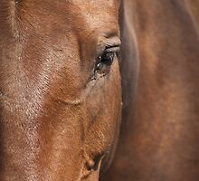 The Old Brown Mare by George Davidson