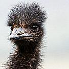 Emu by Kathryn Potempski