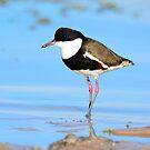 Red-kneed Dotterel Taken Balaka Lake in Western NSW by Alwyn Simple