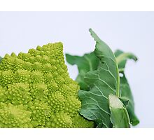 Romanesco Photographic Print