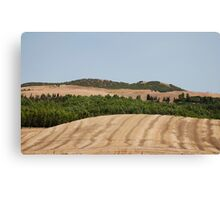 Brown Field and Trees Canvas Print