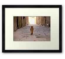 Malta 4 Framed Print