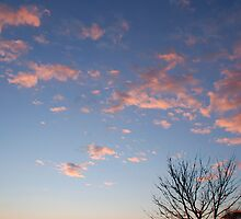 Pink Clouds by jojobob