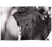 Winter Leaves Poster