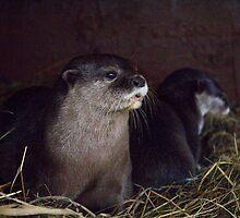 Otter holt by MisterD