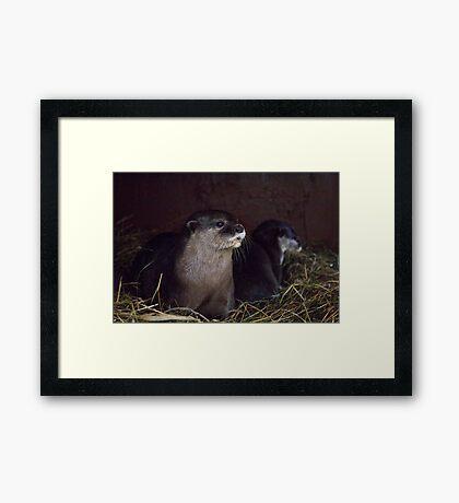 Otter holt Framed Print