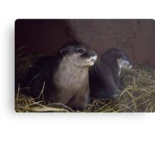 Otter holt Metal Print
