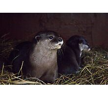 Otter holt Photographic Print