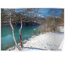 Lakeside Trees in Snow, Friuli Poster